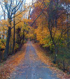 Project HORSE, Leesburg, VA Loudoun County Virginia, Wonderful Places, Beautiful Places, Leesburg Va, Autumn Scenes, Back Road, Road Trippin, New Adventures, East Coast