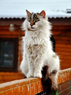 Cute Cats And Kittens, Cool Cats, Kittens Cutest, Pretty Cats, Beautiful Cats, Animals Beautiful, Grand Chat, Cat Oc, Gatos Cats
