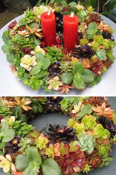 Corona de Navidad, con crasas y suculentas
