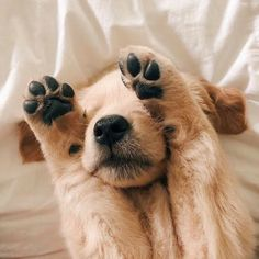 cute, adorable i animal grafika w We Heart It Super Cute Puppies, Cute Baby Dogs, Cute Dogs And Puppies, I Love Dogs, Doggies, Animals And Pets, Funny Animals, Cute Little Animals, Cute Animal Pictures