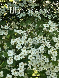Herbs, Plants, Honey, Herb, Planters, Plant, Spice, Planting