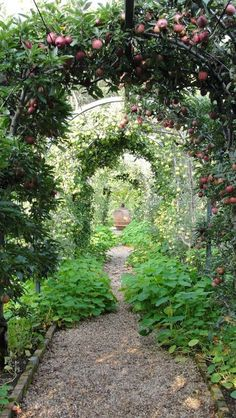 """""""Shade tree lined path under the Apple Tree Garden Arbor is fantastic."""" -MB. 