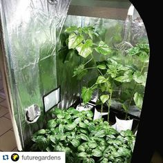 #Repost @futuregardens with @repostapp GROW TENTS AVAILABLE IN ALL SIZES! GET STARTED & Want to do some indoor gardening? Grow tent hydroponics system are ...