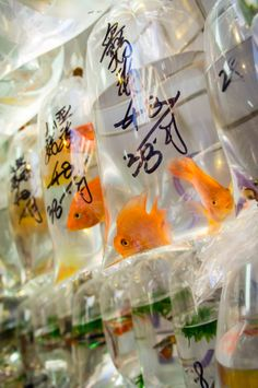 Goldfish Street Shop, Hong Kong omggg I always miss this place and the pet street!!  They have goldfishes the size of a big cantaloupe!! Makes me want to take home all the fascinating super cute pets and fishes back to Hawaii!! If I could get pass customs lolololo