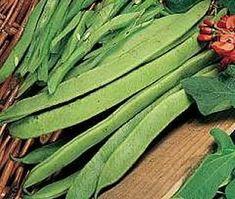 Recommended varieties of Runner Beans in the UK Growing Beans, Runner Beans, Bean Seeds, Garden Plants, Green Beans, Vegetables, Vegetable Recipes, Veggies