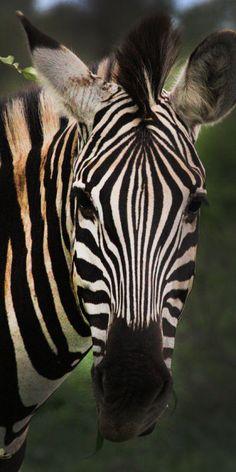 Africa Safari 003