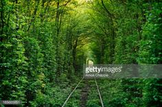 03-19 The 'Tunnel of Love', an overgrown private... #klevan: 03-19 The 'Tunnel of Love', an overgrown private railway which serves… #klevan