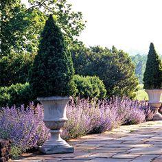 Garden urns and lavender - summer house Formal Gardens, Outdoor Gardens, Container Plants, Container Gardening, Amazing Gardens, Beautiful Gardens, Landscape Design, Garden Design, Pergola