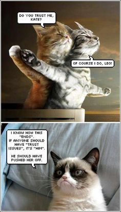 Your mean Grumpy Cat - Grumpy Cat - Ideas of Grumpy Cat - Aww. Your mean Grumpy Cat Funny Cat Quotes The post Aww. Your mean Grumpy Cat appeared first on Cat Gig. Funny Grumpy Cat Memes, Cute Cat Memes, Funny Animal Jokes, Funny Animal Videos, Cute Funny Animals, Funny Cats, Videos Funny, Grumpy Cat Breed, Grump Cat