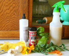 Natural pesticides can easily be made from common kitchen items.