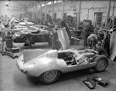 Megadeluxe — jacqalan: Jaguar D-Type