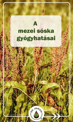 Doterra, Spices, Health Fitness, Medical, Herbs, Health, Lawn And Garden, Spice, Medicine