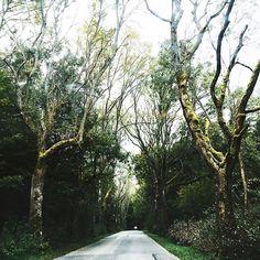#road #trip #kaliningrad #tree
