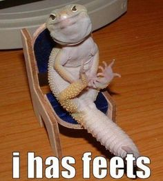 Hilarious Animal Pictures With Captions
