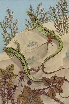 Maurice Pillard Verneuil - L'animal dans la decoration - 1897 - via NYPL (high res tiffs available)