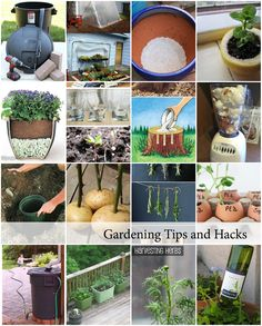 Gardening Tips and Hacks Cover