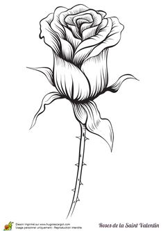 Coloriage rose rouge saint valentin sur Hugolescargot.com - Hugolescargot.com