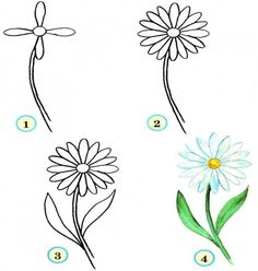 Learn to Draw for Kids Flowers Step by Step, Pictured Tutorials
