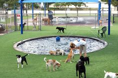 """""""Pompano Pet Lodge has created one-of-a-kind dog parks and pool areas, complete with experienced, well-seasoned handlers, dirt and pest free artificial NFL-style turf, water jet fountains and industrial grade cooling UV shade tents. Our in-ground, chlorine and chemical-free pools measure 24 inches in maximum depth, with shallow edges, swim-outs and water-jet fountains. Webcams and our ODOGGY app make it easy for you to view your pet at play while you're away."""""""