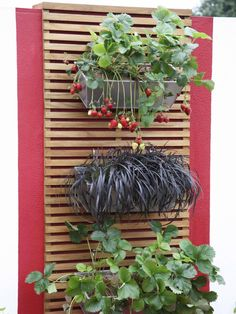 Might be another nice way to put up some greenery. Those Wholly Pockets can get so expensive.