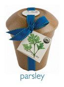Parsley Rice Hull Garden Kit by Potting Shed Creations