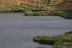 Rapa Nui / Easter Island / Isla de Pascua. Totora reeds in the lake at Rano Raraku. Rapa Nui flora & fauna (14)/ Rapa Nui landscape (20). Photo: Mike Seager Thomas, UCL Rapa Nui Landscapes of Construction Project. You are welcome to use/ circulate the photo but please credit it to the project