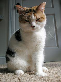 Three-legged cats are a little sad but SO cute.