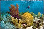 Snorkeling in Islamorada in the #FloridaKeys