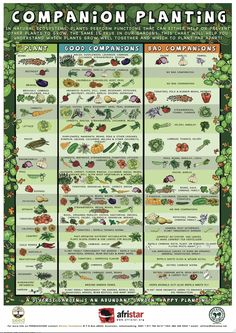 Companion Planting made simple. Find your crop in the left column then look to find good companions and bad companions.: