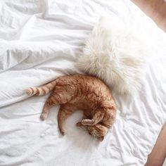 Can I be my cat pls?  #KingGust
