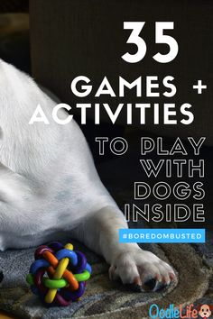 Here are 35 brilliant boredom busters to play with your dog. Keep your puppy happy and entertained during a mandatory lock-in! Heaps of ideas, activities and games to play with dogs indoors.  Games, tricks, activities and easy doggy DIY - Check out mega list of fin things to do indoors with your dog! Brain Games For Dogs, Dog Games, Games To Play, Big Dogs, Cute Dogs, Dogs And Puppies, Small Dogs, Dog Activities, Indoor Activities