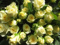 Lemon Ice Spray Roses, Beautiful Roses, Wedding Events, Claire, Lemon, Vegetables, Flowers, Veggies, Veggie Food