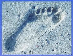 Footprint in the Sand, by Terry Weaver