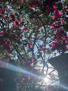 Mixed Media Artists, Bloom, Tropical