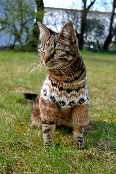 Sweater cat - Okay, maybe this is taking it too far, but hey - the cat does seem to be okay with it, and if he's sitting still he's fair game, right?