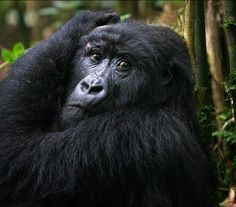 Endangered animals - The Christian Science Monitor - CSMonitor.com
