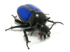 glass sculptor Wesley Fleming - artwork, 'Jewel Beetle'