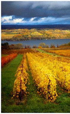 Winery near the Finger Lakes, upstate New York. This looks just like my favorite winery Bully Hill