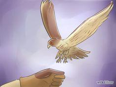 How to Become a Falconer -- via wikiHow.com