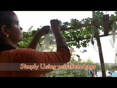 How to prevent Bitter Gourd Fruit Rot by Fruit Fly attack Fruit Flies, Gourds, Bitter, Study, Youtube, Pumpkins, Studio, Gourd, Studying