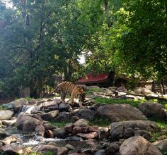 Great Plains Zoo in Sioux Falls, SD