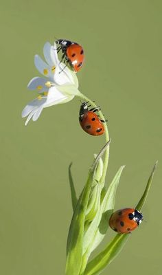 69 Ideas animal nature photography lady bug for 2019 Types Of Butterflies, Types Of Flowers, Beautiful Creatures, Animals Beautiful, Cute Animals, Beautiful Bugs, Beautiful Flowers, Beautiful Butterflies, Bugs And Insects