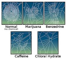 CaffeinatedSpider - Effect of psychoactive drugs on animals - Wikipedia, the free encyclopedia