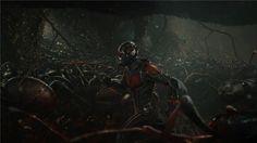 Ant-Man (2015)http://www.imdb.com/title/tt0478970https://letterboxd.com/film/ant-manhttps://www.themoviedb.org/movie/102899-ant-man