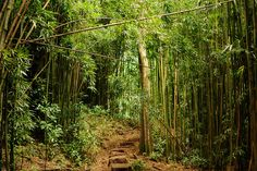 Manoa Falls Trail | Flickr - Photo Sharing!