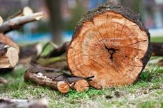 At Ben's Tree & Garden, Cutting offers professional tree removal services across Sydney that will safely remove any tree from your property. For further details please contact here : 0439 413 375