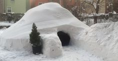 Someone In Brooklyn Built An Igloo In The Blizzard, Then Listed It On Airbnb Un Igloo, Igloo Building, Brooklyn, India Street, New York, Winter Wonder, Back Gardens, Architecture, A Boutique