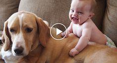 Muito Cuidado Com Crianças e Animais Juntos… Podem Criar Momentos Maravilhosos!