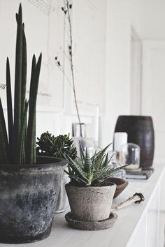 Ideas For Plants In Bedroom Cactus Cool Plants, Potted Plants, Cactus Plants, Indoor Plants, Concrete Planters, Planter Pots, Plant Design, Garden Design, Rose Bush Care