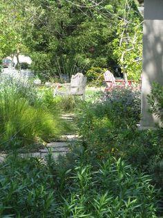 Bringing Back the Natives Garden Tour Australian Garden Design, Australian Native Garden, Water Wise Landscaping, Front Yard Landscaping, Back Garden Design, Garden Inspiration, Garden Ideas, Native Plants, Landscape Design